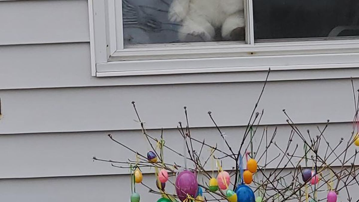 Lansing woman Mary Jane Brown asked her neighbors to put teddy bears in their windows for kids to find while they spend time outdoors. (Source: WILX - Mary Jane Brown)