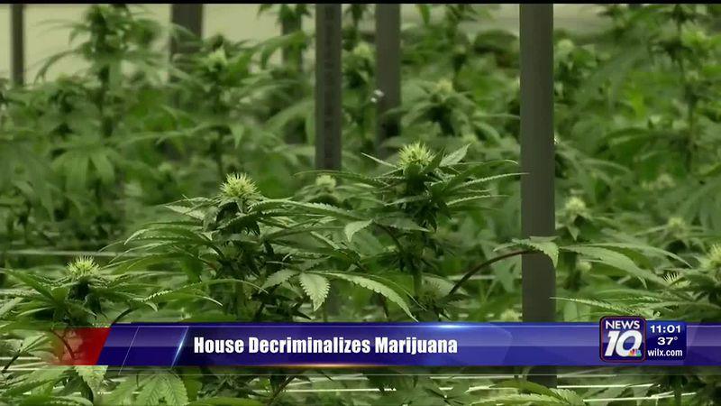 Cannabis shop and attorney push for decriminalization of marijuana