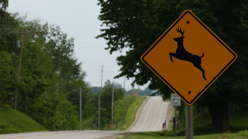 A deer caused a crash involving seven vehicles Sunday night.