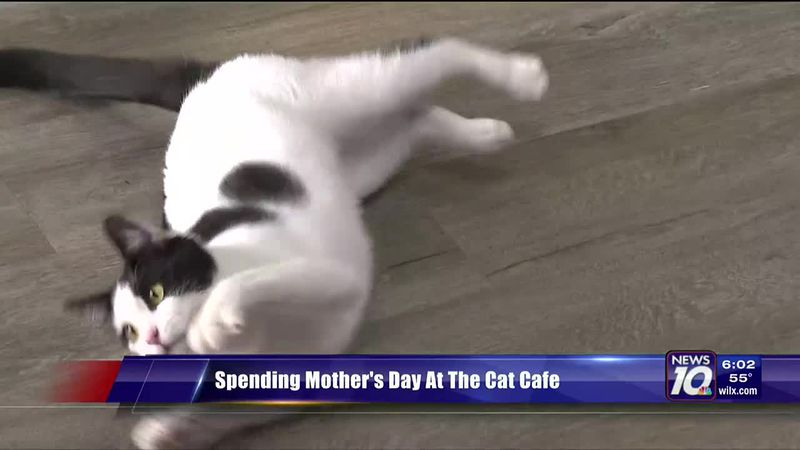Spending Mother's Day At The Cat Cafe