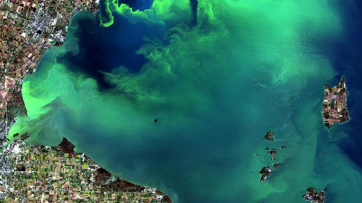 Western Lake Erie and an algae bloom as seen from a Landsat-8 satellite in September 2017. (Source: NASA/USGS)