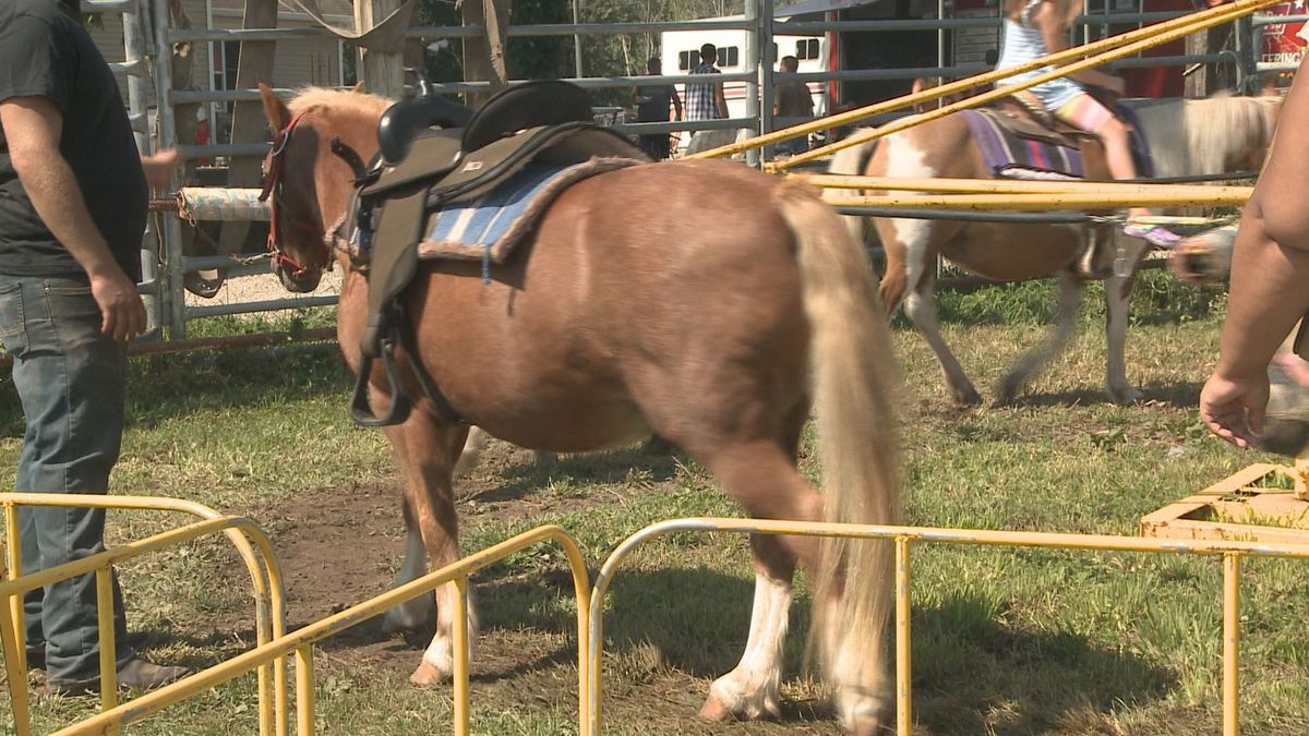 Cunningham Pony Rides held a Farm Family Fun Day on Sunday at their farm in Perry.