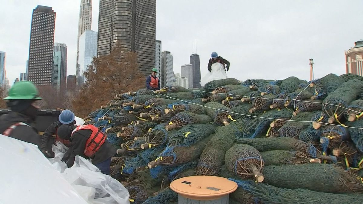 The holidays are getting closer as Christmas trees from northern Michigan arrived in Chicago. (Source: WILX)