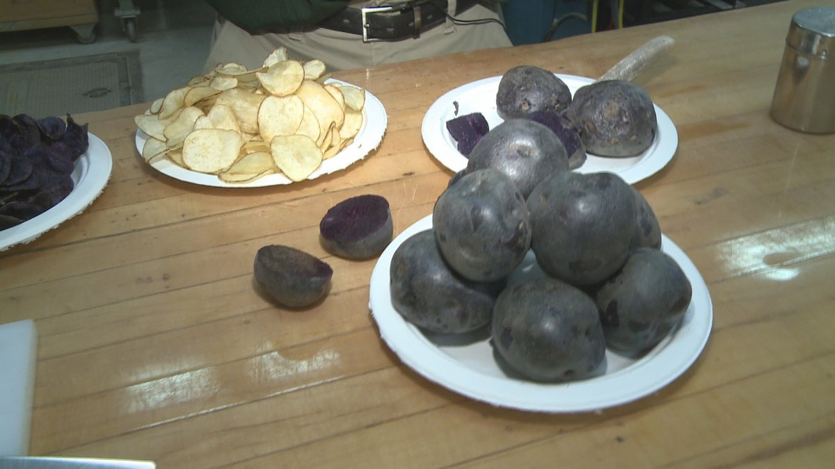 MSU's Agronomy Farm has spent 20 years developing purple potatoes. Now, they're being made...