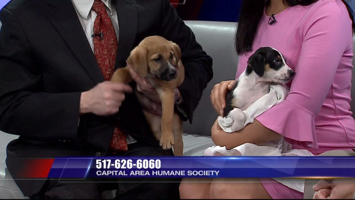 One is a boy and one is a girl and they are sweet and friendly. (Source WILX)