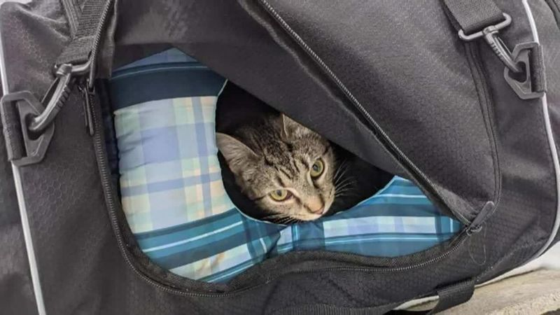 A suspicious bag outside an Ohio church reveals a cat and six kittens inside.