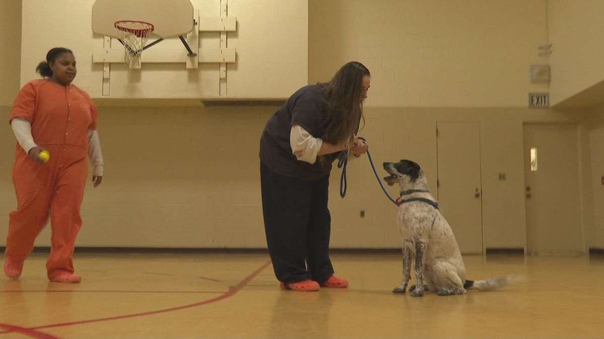 """The Ingham County Sheriff's Office is partnering with Ingham County Animal Control & Shelter on a pilot program called """"New Leash on Life.""""  (Source WILX)"""