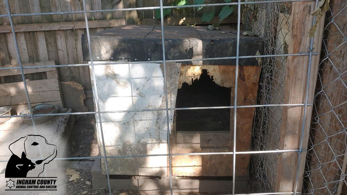 Ingham county animal control seized dogs from a property after multiple complaints of alleged dog fighting.