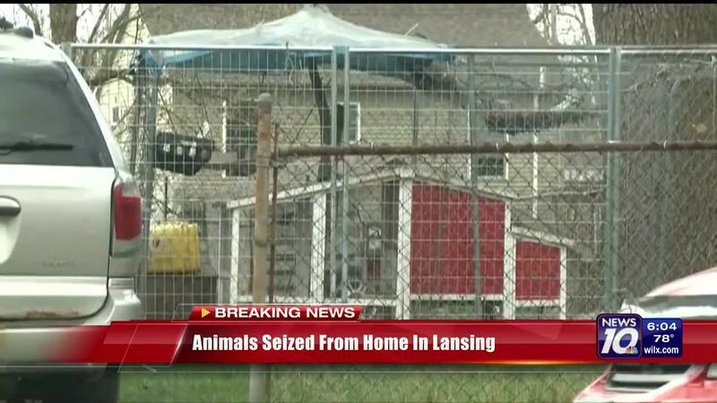 Animals seized from home in Lansing