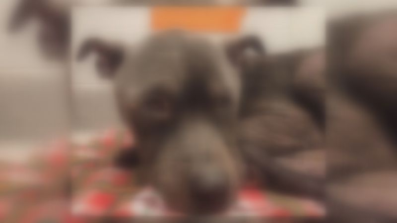 Blurred Image of CAH Rescue Dog