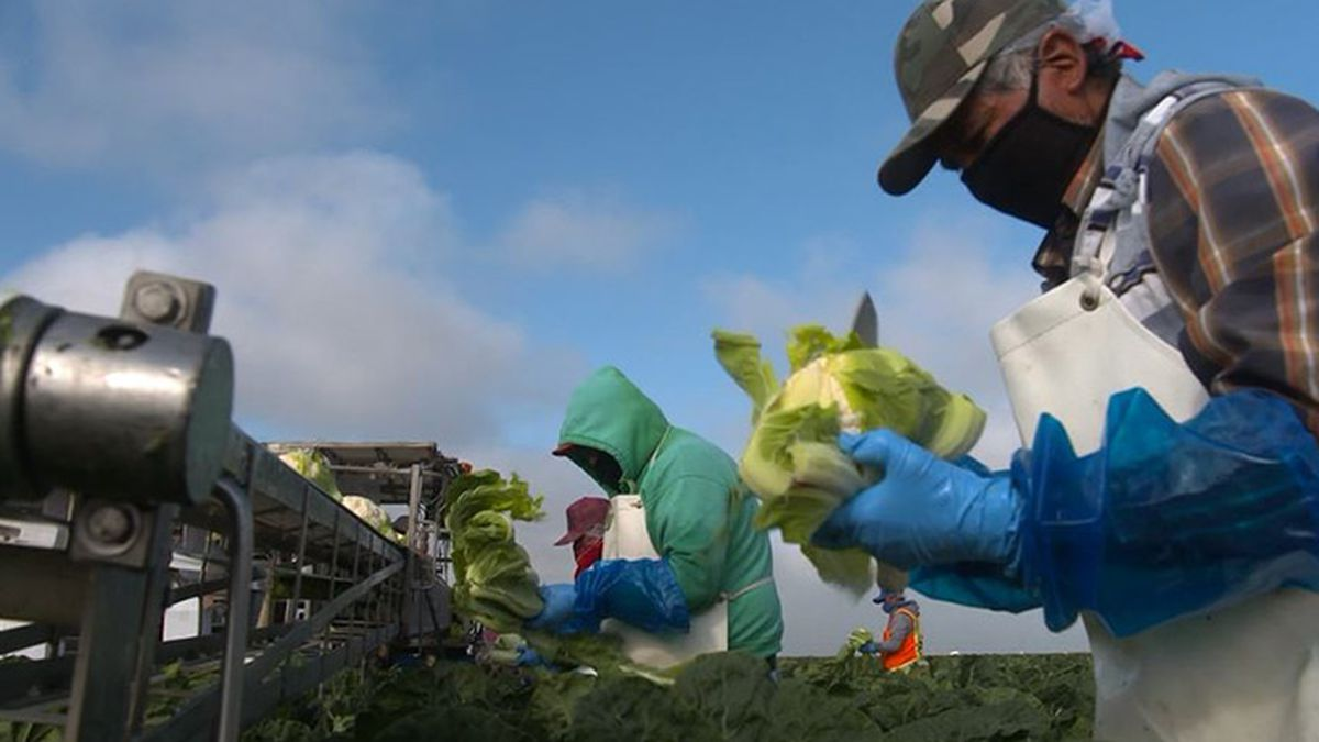 Agricultural workers are a critical part of the food delivery system. (Source: CNN)