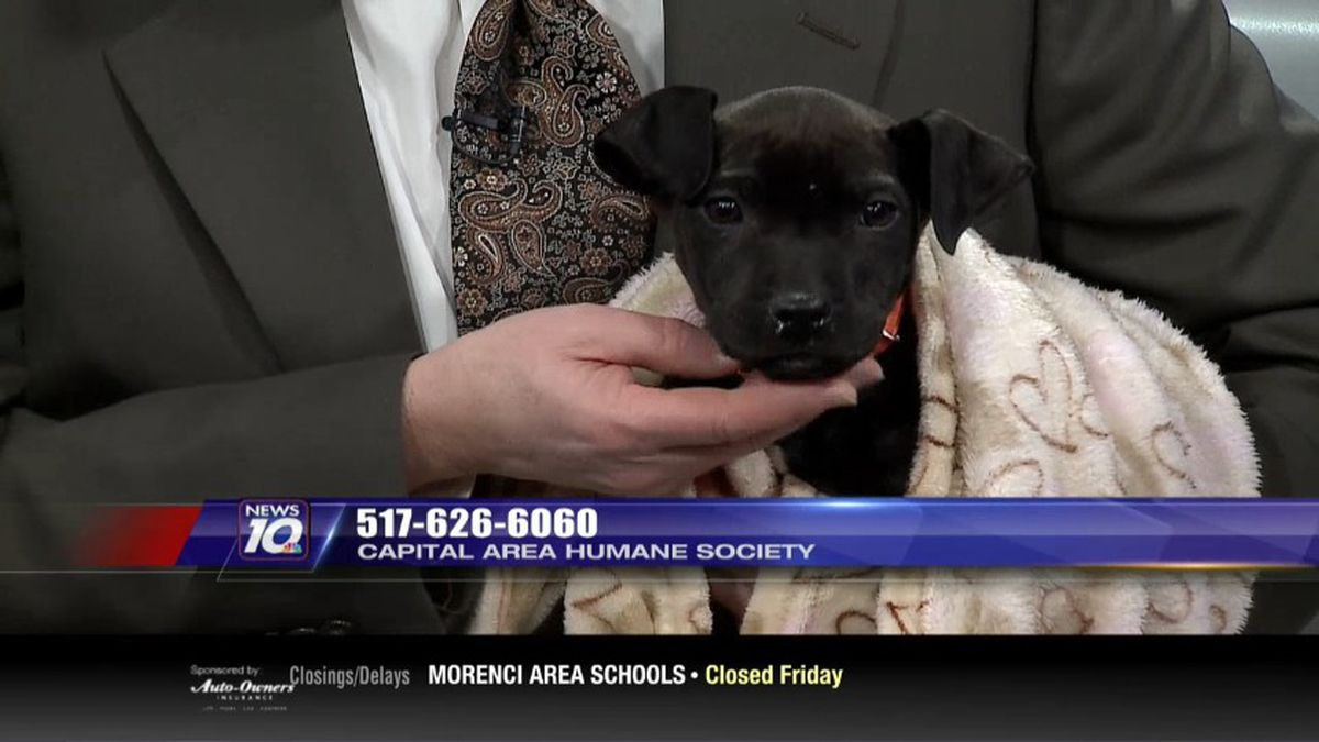 Lucille is a beautiful black puppy who is 2 months old. (Source WILX)