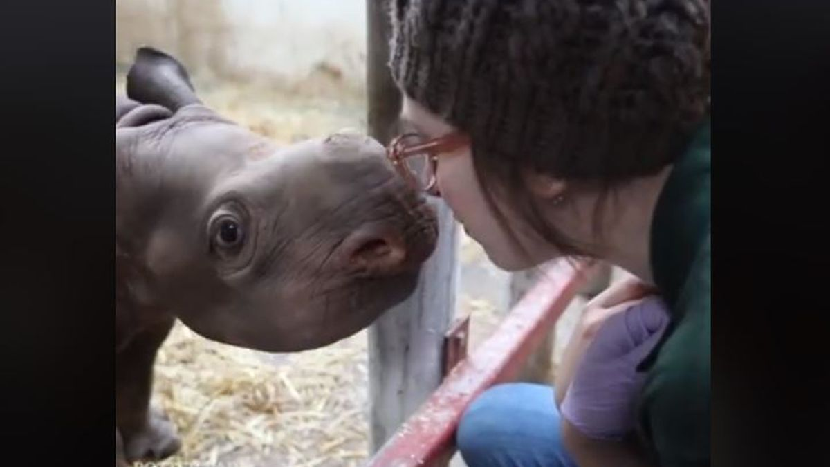 Jaali, Potter Park Zoo's baby rhino, was caught on camera Thursday giving out nose kisses in...
