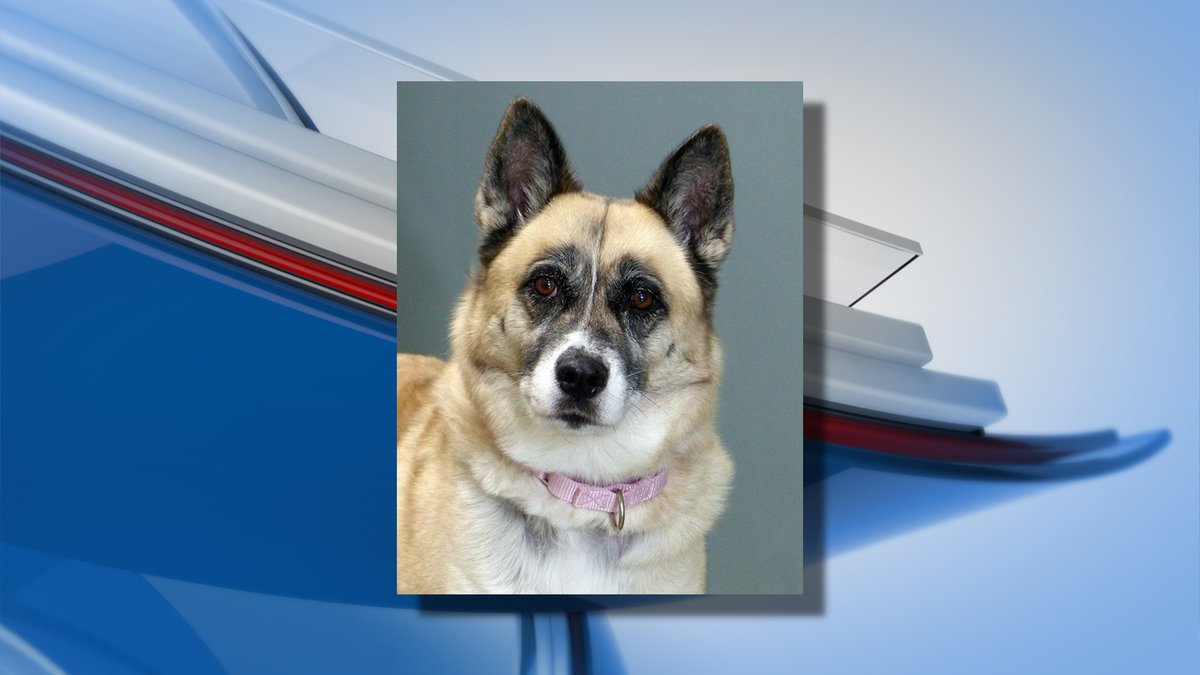 Ingham County Animal Control is looking for the community's help in emptying the shelter.