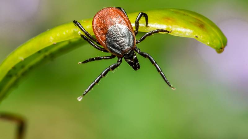 The tick population growing.